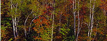 Fall Panorama Along the River, NH