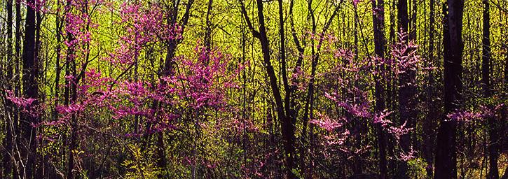Ben Greenberg Photography Early Spring Panorama Albemarle