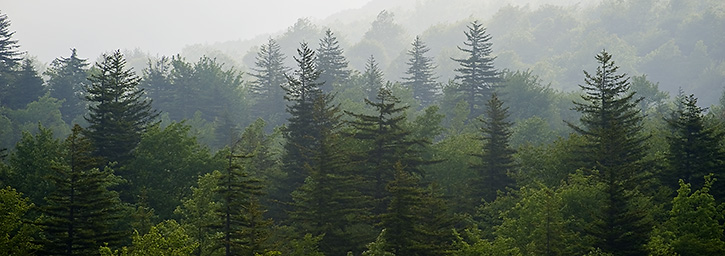 Ben Greenberg Photography Foggy Evergreens At Grayson